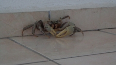 Mr Crabe nous rend une visite