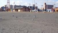 Le gang des oiseaux de mers (impossible de faire la différence entre une mouette et un goéland v_v)