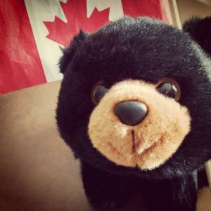 L'ours le plus adorable du monde (et pas besoin de le nourrir)