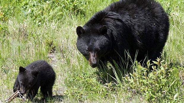 Google image le meilleur moyen d'avoir de jolies images d'ours sans aucun danger !